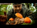 Цезарский гриб мухомор цезаря - вкусный гриб на Черном море Геленджик grib