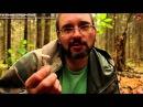 Гигрофор вкусный и съедобный гриб в поздне ноябрьском лесу для опытного грибника