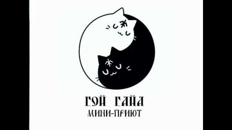 Коты мини-приюта Гой Гайа