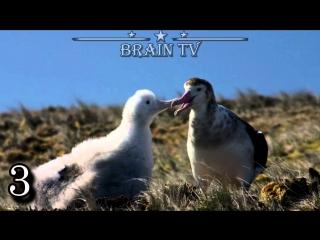 ТОП 5 самых необычных способов спаривания животных. 2 ЧАСТЬ. ОТ BRAIN TV.