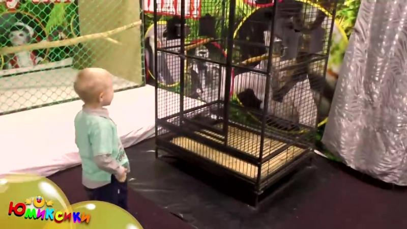 Выставка экзотических птиц в Вестер-Гипере, часть 3 попугаи. Клоун Абик, Макс и Вовка