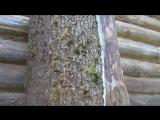 Колода с пчёлами в Поместье Вахтанга