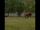 далеко,далеко ускакала в поле молодая лошадь