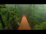 Звук дождя и птиц | исцеление Сакральной чакры | Музыка для медитации со звукам