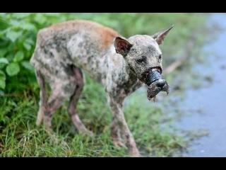 [Lucky Dog] Chú chó bị buộc mõm ở Bến Tre đã được cứu sống - You Are Not Alone