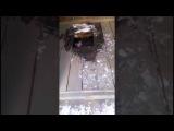 Водитель Lexus пытался скрыться в дыре деревянного туалета после ДТП в Чите