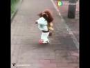 Собачка с рюкзаком