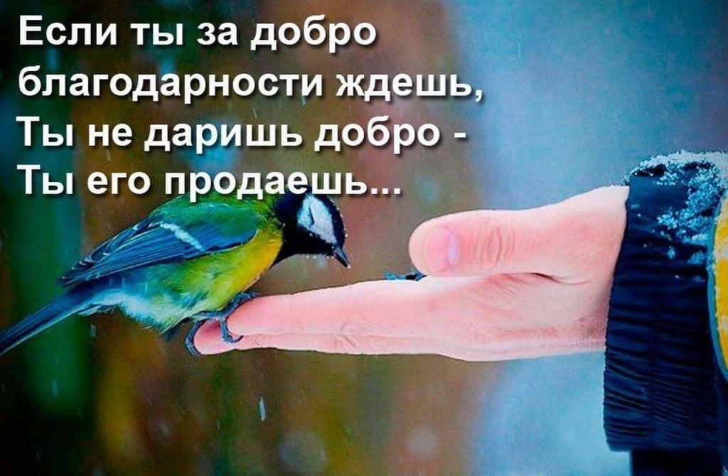 https://pp.vk.me/c637624/v637624970/9f3f/EutEcVOKKKo.jpg