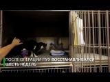 Кот Пух с бионическими протезами на задних лапах - 720p
