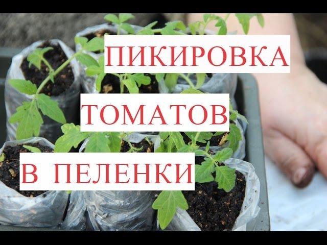 Пикировка Томатов в Пеленки 25 03 17