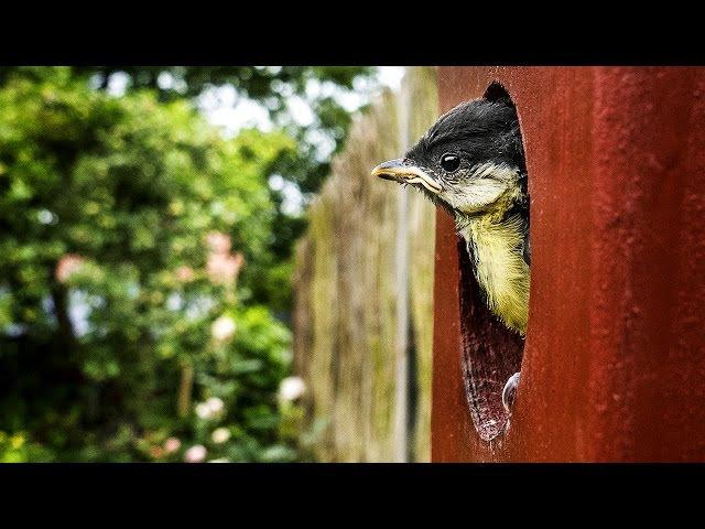 Nesting box by Zooom