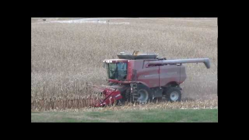 Case IH 8010 with 2608 chopping head