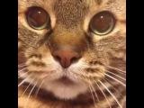 Hard Rock Cat