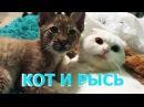 ЖИЗНЬ КОТА С РЫСЬЮ. Как кот Пусси вырастил рысь Ханну