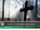 Толока на найстарішому кладовищі