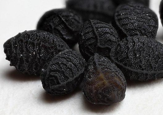 семена Нигелла Сатива