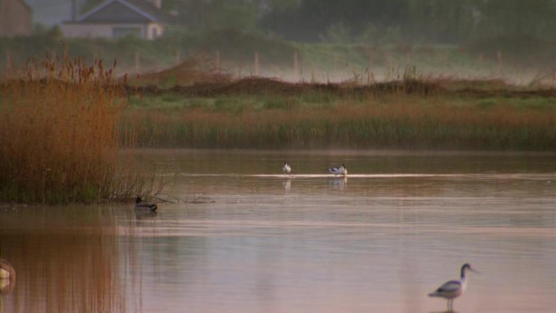 BBC. Тайная жизнь птиц / Созданные для жизни в Уэльсе (2010) BDRip 720p