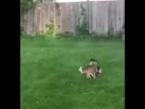 олень страшный зверь