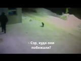 Ничего необычного, просто охранник показал дорогу коту...