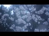 KASHIWA Daisuke - april.#19