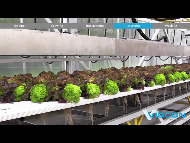 Viscon Hydroponis - Fully Automated Hydroponic System - Gipmans