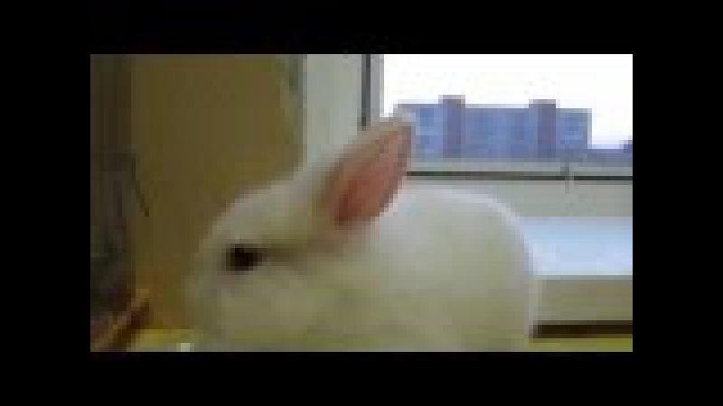 Как отучить кролика грызть обои в квартире? Кука ночью погрызла обои, а утром продолжила..))