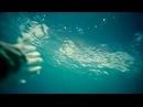 ALEKSEEV-Дельфины