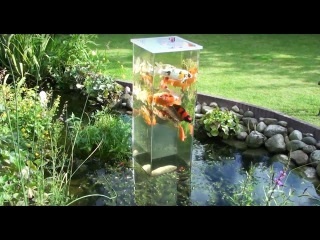 Creating An Inverted Aquarium For Pond