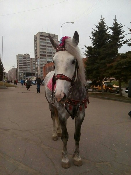 https://vk.com/horses_in_the_city?w=wall-12113906_351746