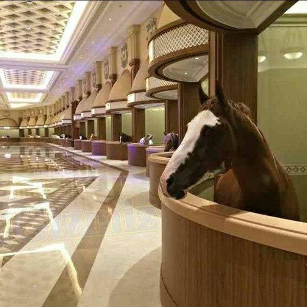 Только в Дубаи можно увидеть конюшни с мраморным полом