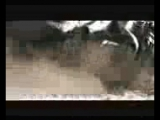 arslanbek-sultanbekov--dombira