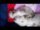 Сладкий сон кото ребёнка