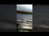 Рыбалка змееголов