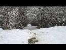 Нереальный кайф. Спуск со снежной горки в лесу.
