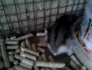 Video-2016-12-11-12-21-56
