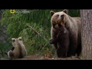 Дикая природа России - Первозданные долины (6 серия из 6)