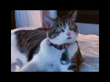 Говорящий кот просит его отпустить