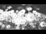 Yann Tiersen - I Saw Daddy Today