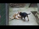 Кошка против собаки! Кто кого? / Cat vs Dog