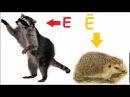 Учим алфавит, буква Е,Ё