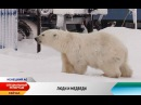 Люди и белые медведи