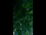 Свадебное дерево МАЙСКИХ ЖУКОВ
