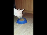Кот ест корм)) Прикол)
