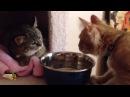 Смешное про животных слез смотреть Прикольный ролик про животных 2016 №11