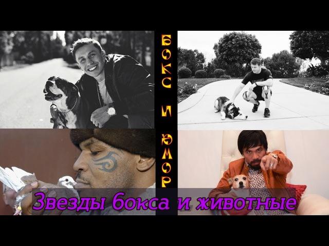Звезды бокса и животные - Boxing stars and their pets pdtpls ,jrcf b ;bdjnyst - boxing stars and their pets