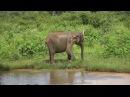 Животный мир Шри-Ланки.