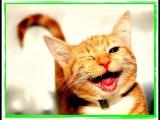ПРИКОЛЫ Смешные коты и кошки 2016 Приколы с котами