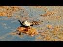 Sustentabilidad marina: Posidonia Marina y su aprovechamiento en el huerto ecologico