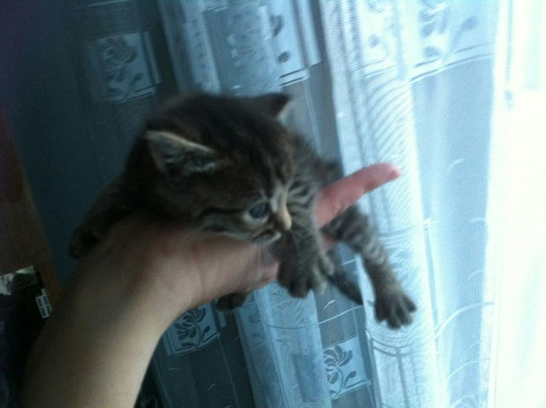 Ищем дом для 4 котят: черные мальчики и полосатые  девочки , в п. Усть