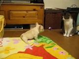 Даже собачка садится на шпагат